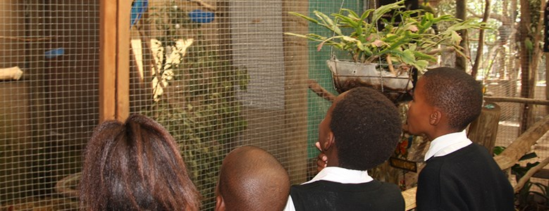 Sunshine and butterflies: a fun day out for pupils